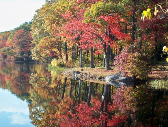 Fall Foliage 2